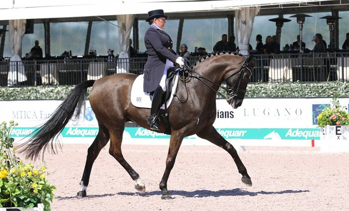 Sommer Saddles And Top Rider Shelly Francis Dressage